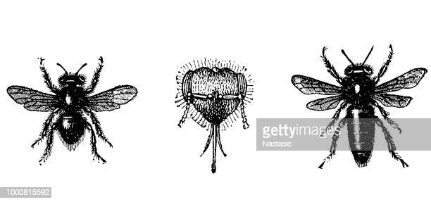 bees - worker bee stock illustrations