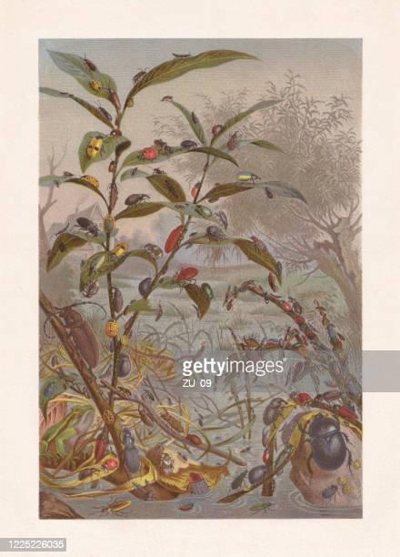 ilustraciones, imágenes clip art, dibujos animados e iconos de stock de escarabajo amenazado por la inundación, cromolitografía, publicada en 1884 - biodiversidad
