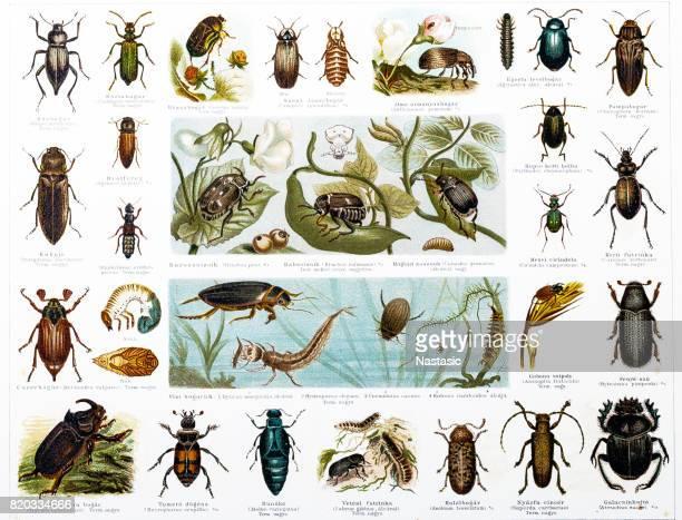 beetles - goose bird stock illustrations