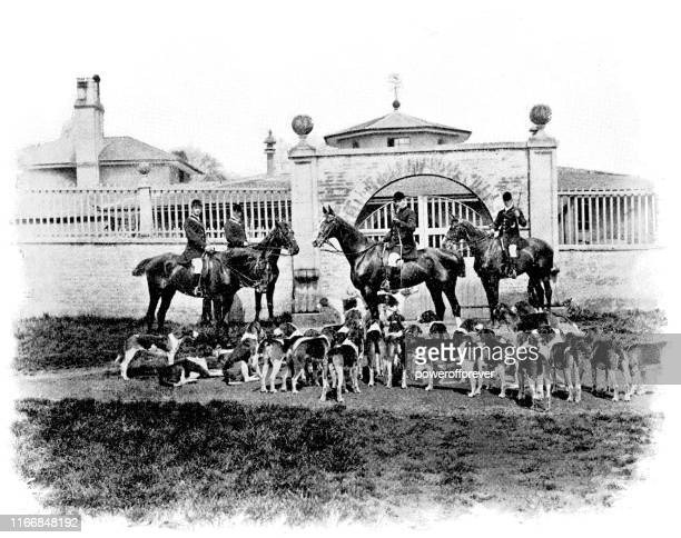 belvoir hunt dog pack in belvoir, leicestershire, england - 19th century - pack of dogs stock illustrations