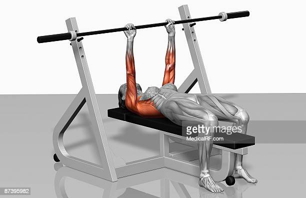 bench press (part 1 of 2) - leisure facilities stock illustrations, clip art, cartoons, & icons