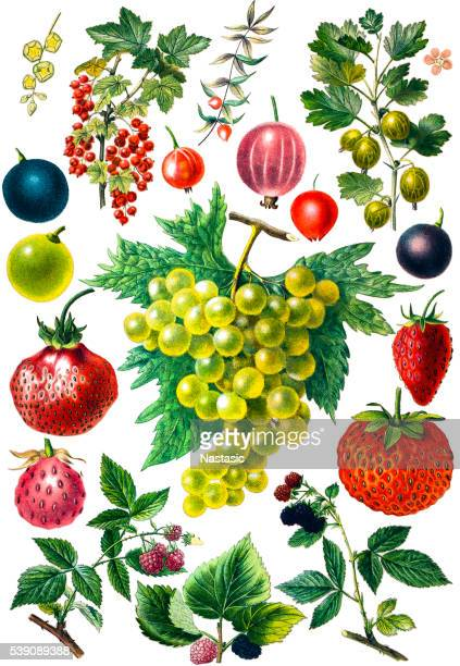 berry fruit set - raspberry stock illustrations, clip art, cartoons, & icons