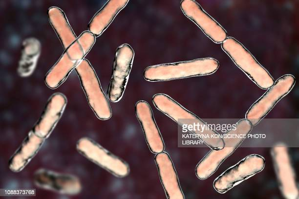 bifidobacterium bacteria, illustration - anaerobic stock illustrations, clip art, cartoons, & icons