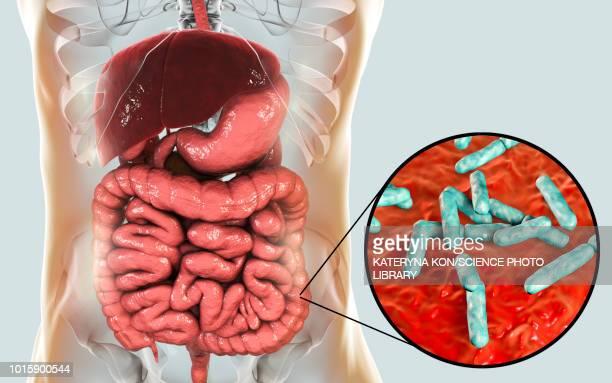 bifidobacterium bacteria in human intestine, illustration - 微生物点のイラスト素材/クリップアート素材/マンガ素材/アイコン素材