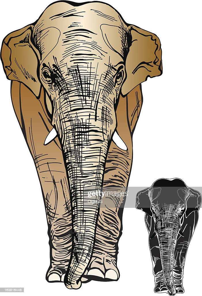 big elephant goes forward