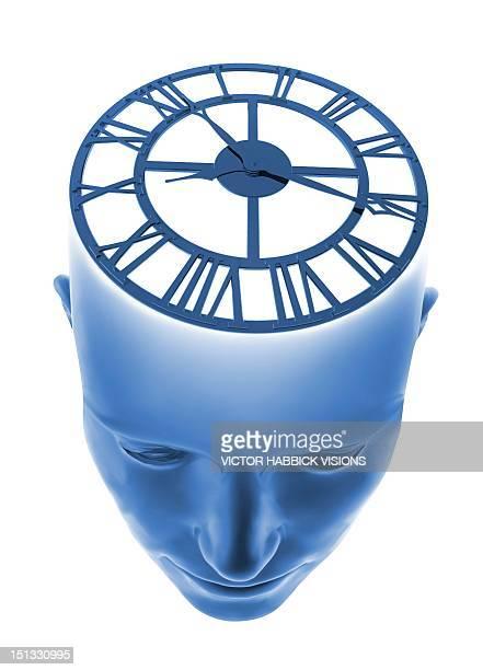 biological clock, conceptual artwork - alertness stock illustrations