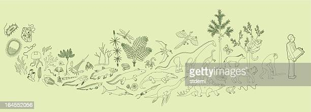 biology - palaeontology stock illustrations