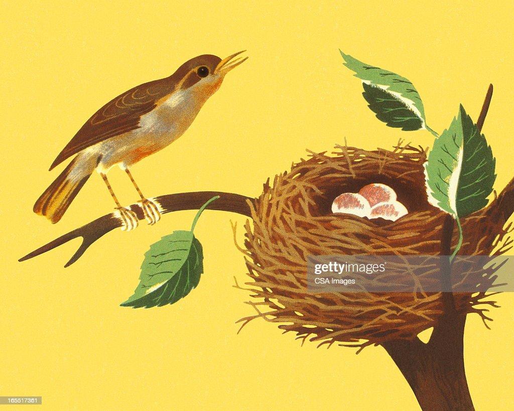 Bird and Bird's Nest on a Branch : Stock Illustration