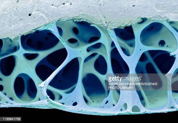 bird bone tissue, sem - anatomy stock illustrations