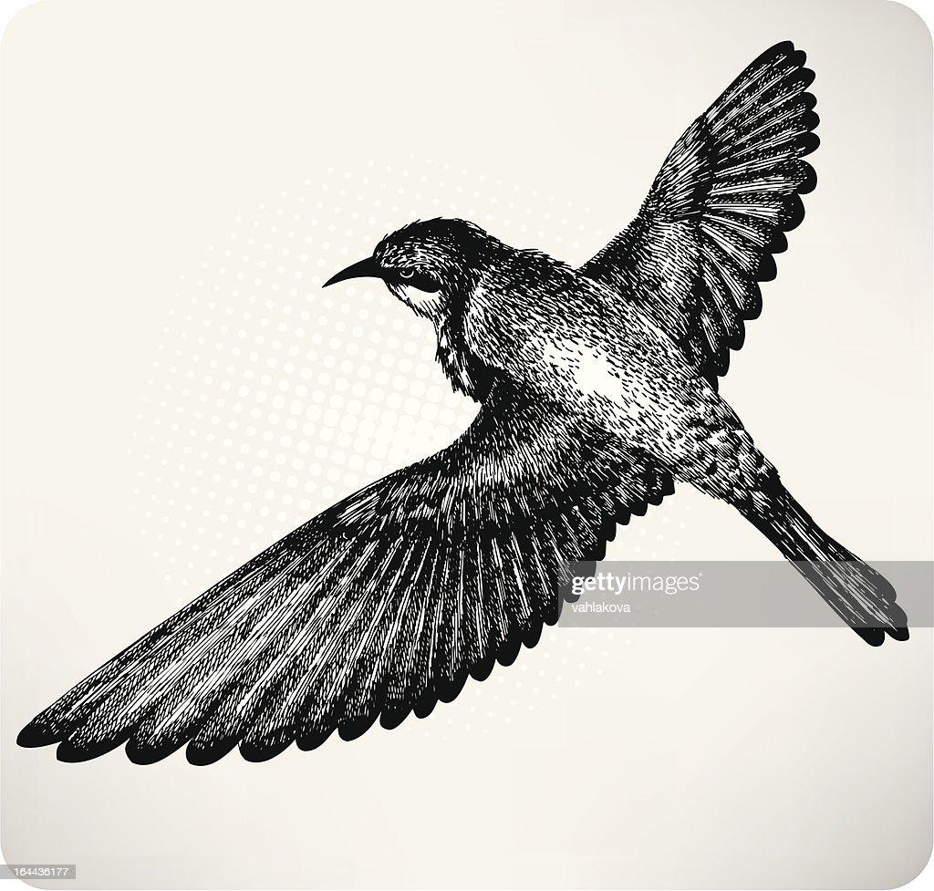 Bird flying hand drawn. Vector