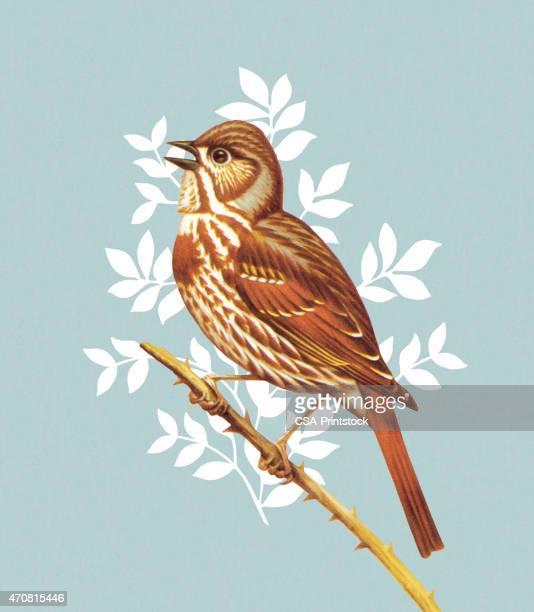 ilustrações de stock, clip art, desenhos animados e ícones de pássaro - canto de passarinho