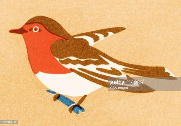 bird - colour image stock illustrations