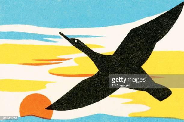 bird - sunset stock illustrations
