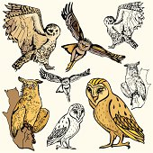Bird Illustrations II: Owls (Vector)