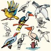 Bird Illustrations XI: Sea Birds (Vector)