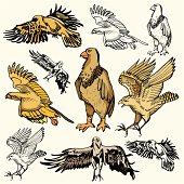 Bird Illustrations XII: Eagles (Vector)