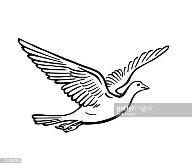 bird in flight - animal wing stock illustrations