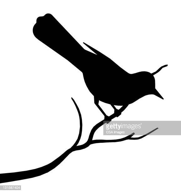 bird on a branch - branch stock illustrations