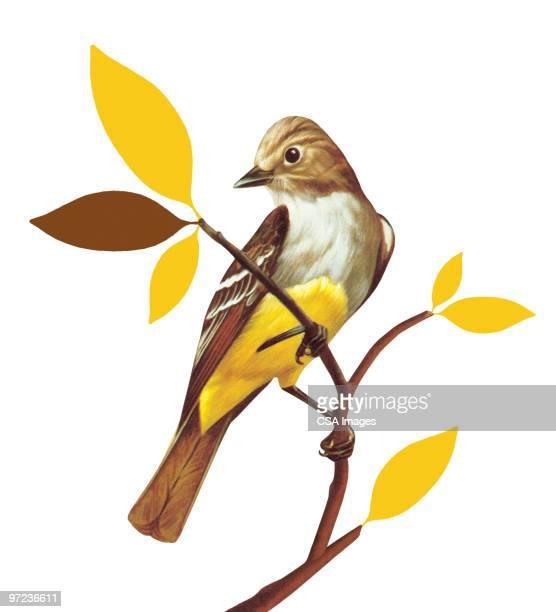 bird on a branch - vertical stock illustrations
