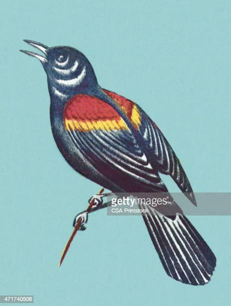 ilustrações de stock, clip art, desenhos animados e ícones de pássaro sobre fundo azul - canto de passarinho