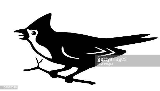 bird on branch - branch stock illustrations