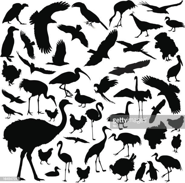 bird silhouettes - ostrich stock illustrations, clip art, cartoons, & icons