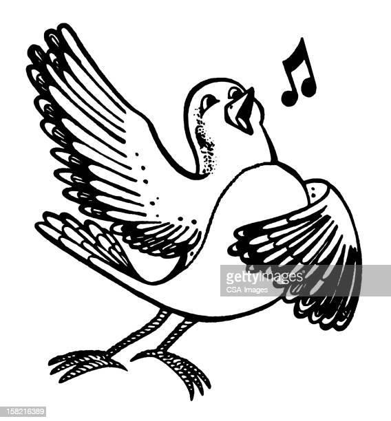 bird singing - mockingbird stock illustrations, clip art, cartoons, & icons