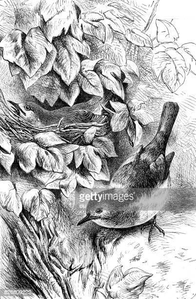 Vogel zittend op de weide: Robin Redbreast.