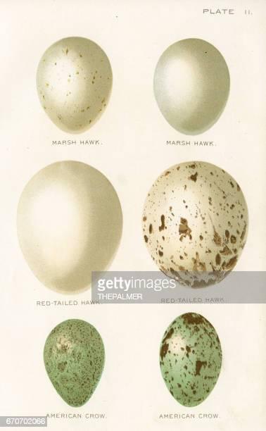 ilustraciones, imágenes clip art, dibujos animados e iconos de stock de huevos de aves litografía 1897 - huevo comida básica