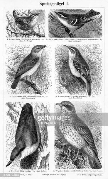 birds engraving 1895 - magpie stock illustrations