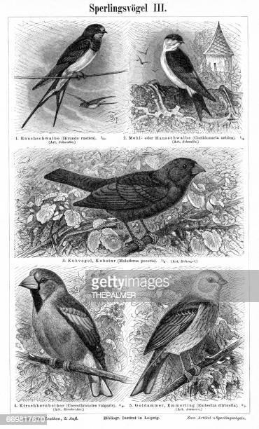 illustrations, cliparts, dessins animés et icônes de oiseaux, gravure de 1895 - hirondelle