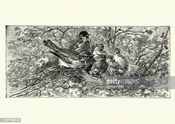 birds feeding its chicks in the nest, victorian 19th century - young animal stock illustrations, clip art, cartoons, & icons
