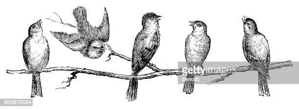 ilustraciones, imágenes clip art, dibujos animados e iconos de stock de pájaros  - pájaro