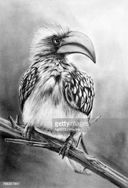 birds pencil drawing - animal limb stock illustrations, clip art, cartoons, & icons
