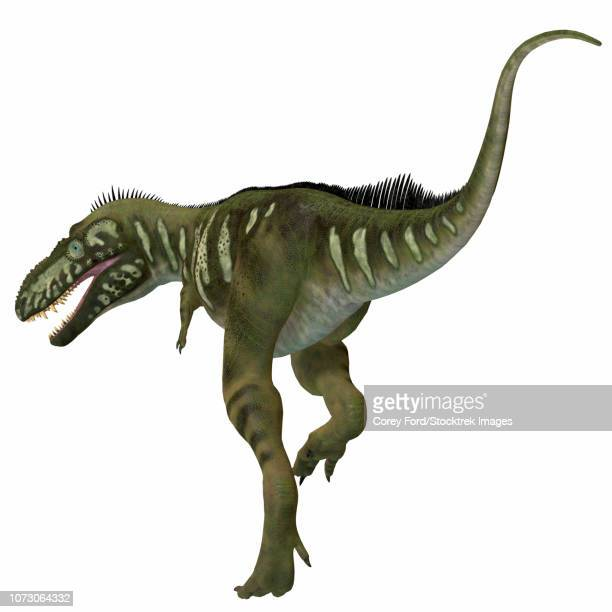Bistahieversor dinosaur, rear view.
