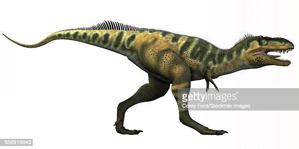 Bistahieversor is a genus of tyrannosauroid dinosaur that lived in New Mexico during the Cretaceous Period.
