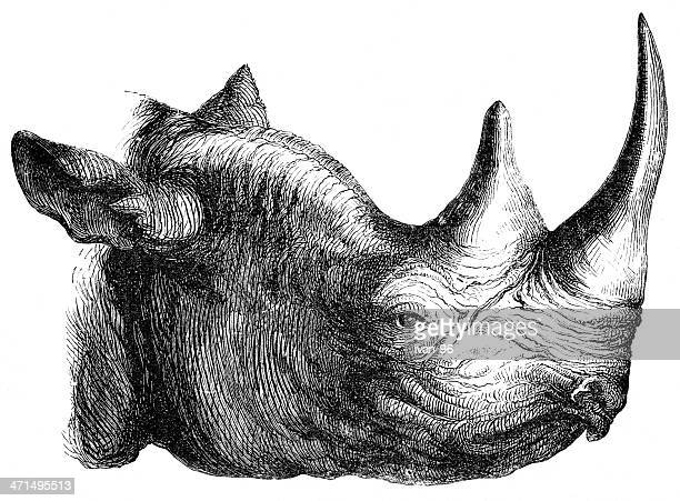 Black and white, detailed profile ink drawing of rhinoceros