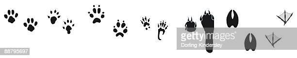 black and white digital illustration of bird and animal footprints  - webbed foot stock illustrations, clip art, cartoons, & icons