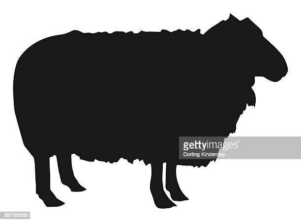 black and white digital illustration of domestic sheep (ovis aries)  - one animal stock illustrations