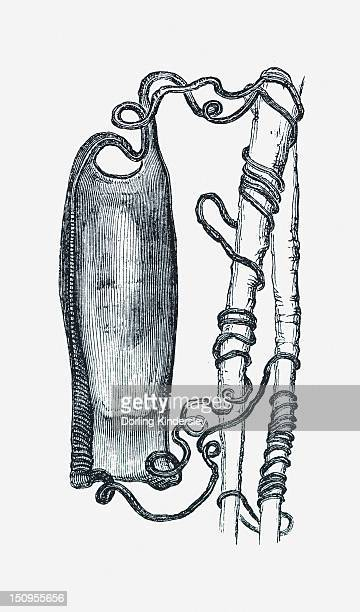 ilustraciones, imágenes clip art, dibujos animados e iconos de stock de black and white illustration of dog fish egg case tied to weed by tendrils - enredadera