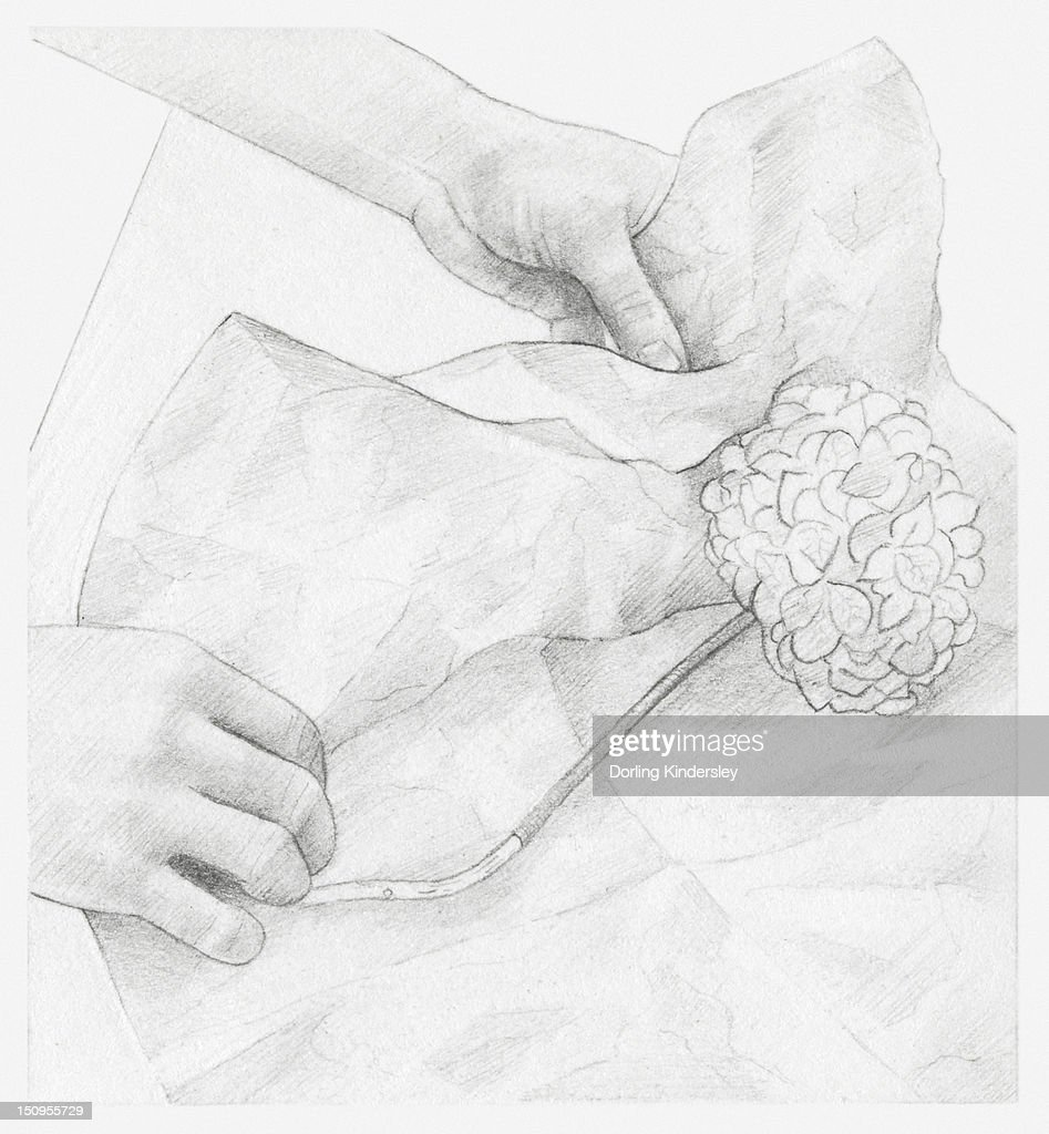 Black And White Illustration Of Hands Wrapping Dried Hydrangea