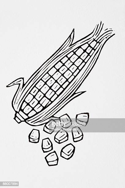 black and white illustration of sweetcorn - medium group of objects stock illustrations, clip art, cartoons, & icons