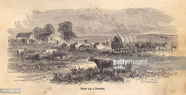 black and white illustration of view on prairie, from 1800s - prairie stock illustrations, clip art, cartoons, & icons