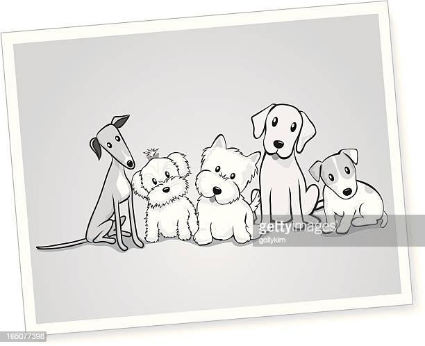 Schwarz und Weiß Porträt von Hunden