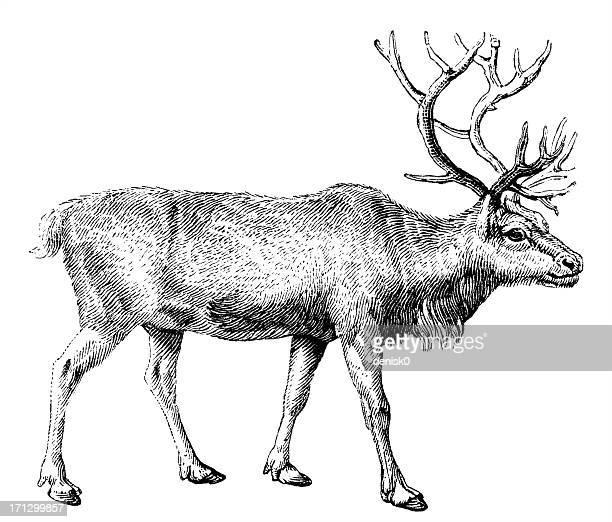 black and white sketch of reindeer - reindeer stock illustrations