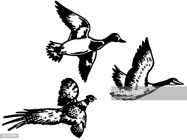 A black and white version of three different breeds of duck flying