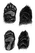 black bear paws scanned engraving