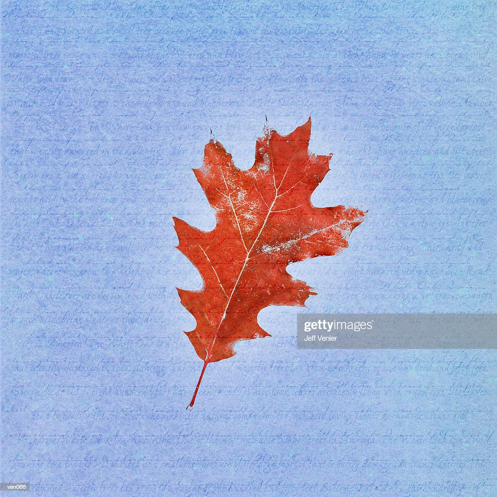 Black Oak Leaf on Descriptive Background : Stock Illustration