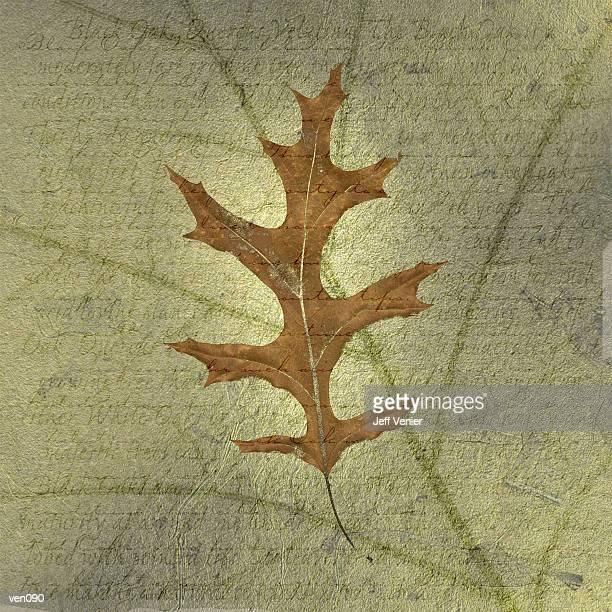 Black Oak Leaf on Descriptive Background