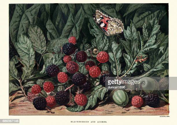 Blackberries and acorns